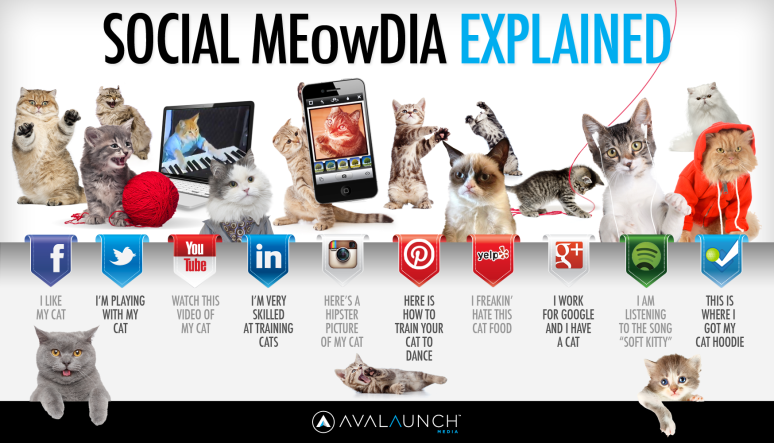 ocial-media-explained-by-cute-cats